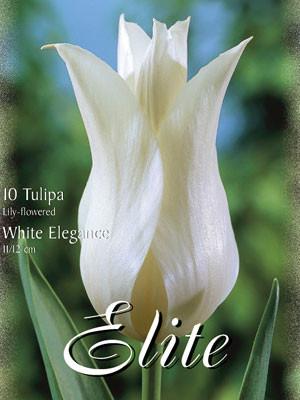 """Lilienblütige Tulpen """"White Elegance"""" (Art.Nr. 595482)"""