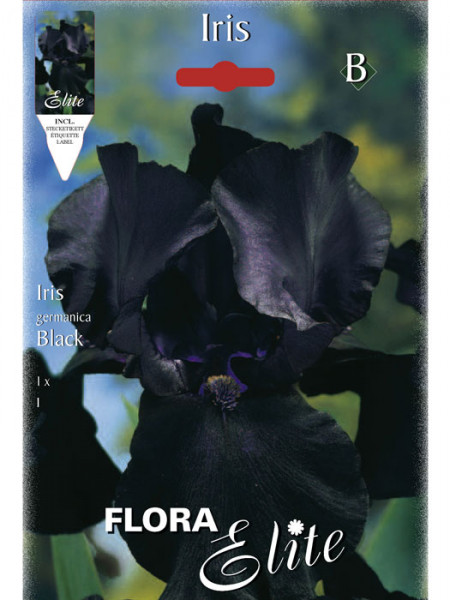 Schwertlilie 'Black', Iris germanica (Art.Nr. 521548)