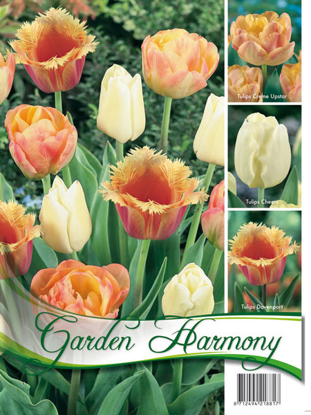 Kollektion pastellfarbene Tulpen (Art.Nr. 598207)