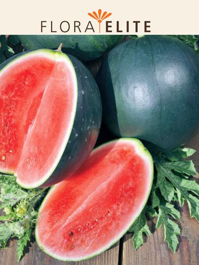 Wassermelone 'Sugar Baby' (Art.Nr. 21275)