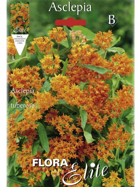 Knollige Seidenpflanze, Asclepias tuberosa (Art.Nr. 520792)