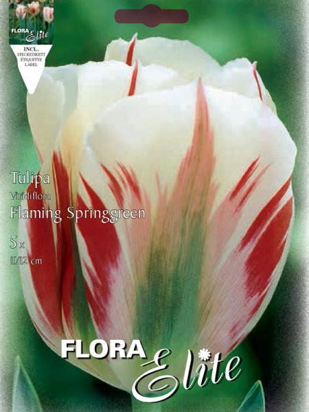 Tulpe Flaming Springgreen
