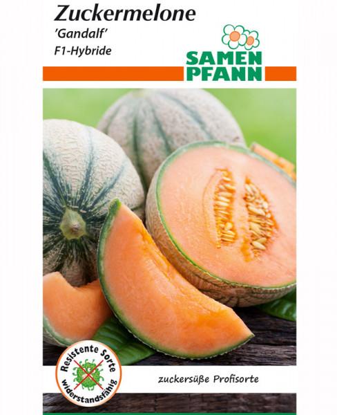Zuckermelone 'Gandalf' - F1-Hybride (Art.Nr. G527')