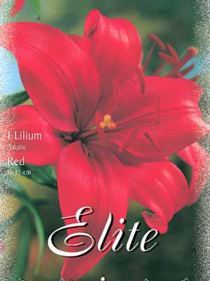 Asiatische Lilien-Hybride 'Red', Lilium (Art.Nr. 521676)