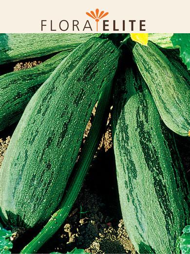 Zucchini 'Coucourzelle' (Art.Nr. 21575)