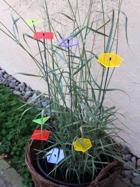 sunart® - leuchtende Gartenkunst