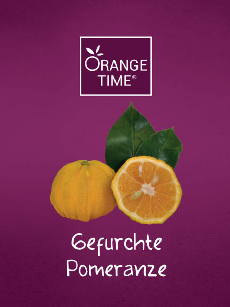 Orangenbaum 'Gefurchte Pomeranze' - Orange Time®