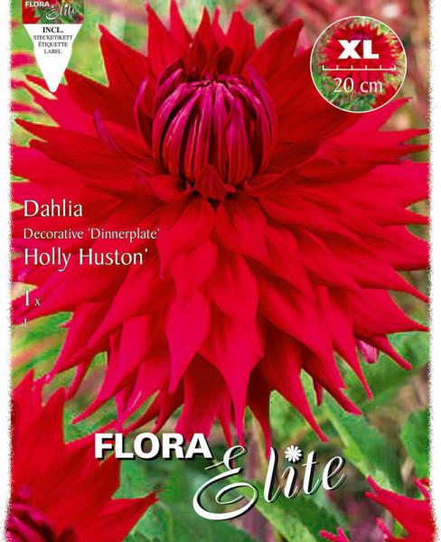 Schmuck-Dahlie 'Holly Huston', Dahlia (Art.Nr. 520149)