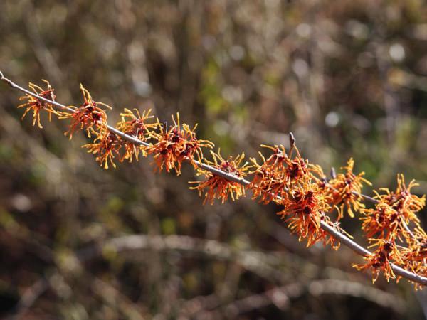 Vielzahl an Blüten an einem Zweig