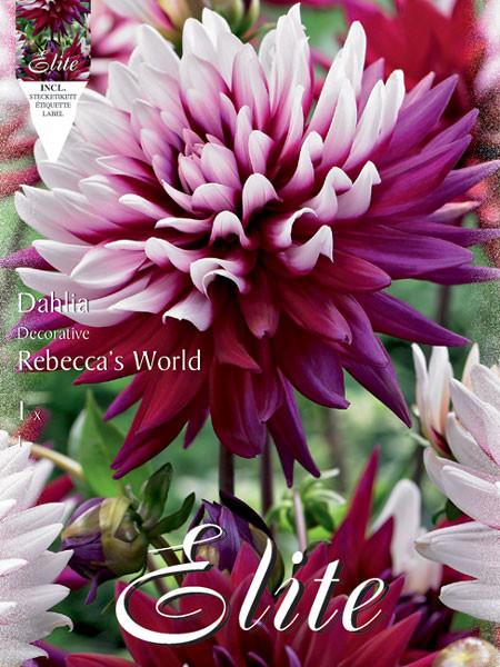 Schmuck-Dahlie 'Rebecca's World', Dahlia (Art.Nr. 520190)