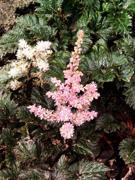 Blatt und Blüte auf einen Blick
