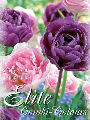 Edle Farbkombination mit späten, gefüllten Tulpen in den Farben rosa und blau (Art.Nr. 598006)