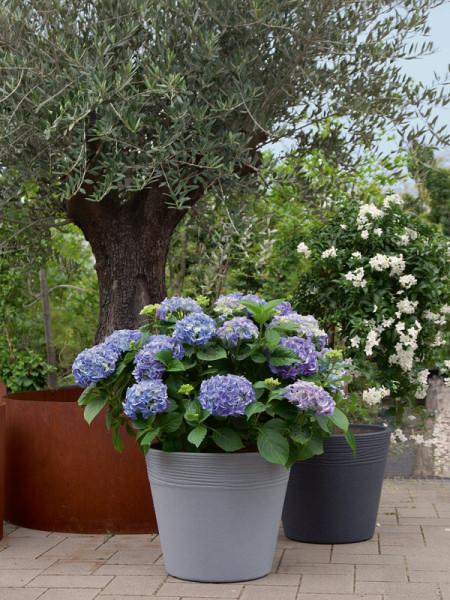 Pflanzkübel Napoli bepflanzt