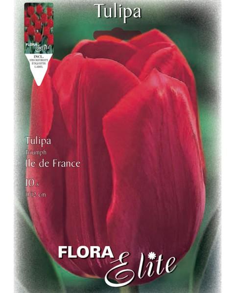 Triumph-Tulpe 'Ile de France' (Art.Nr. 595228)