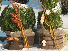 Winterschutz-pflanzen