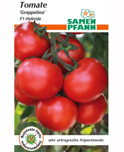 Tomate 'Grappelina' - F1-Hybride (Art.Nr. G864)