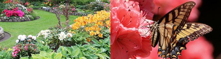 Rhododendron-azaleen