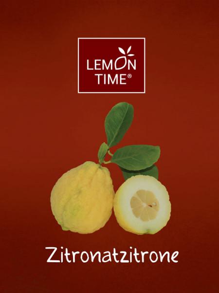 Zitronenbaum 'Zitronatzitrone' - Lemon Time®