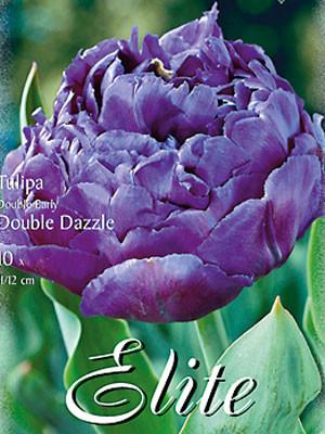 Gefüllte frühe Tulpe 'Double Dazzle' (Art.Nr. 595155)
