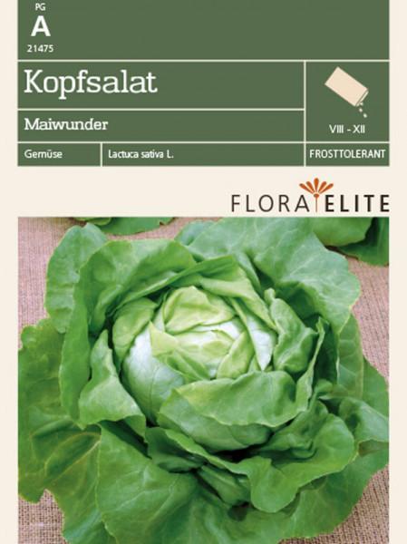 Kopfsalat 'Maiwunder' (Art.Nr. 21475)