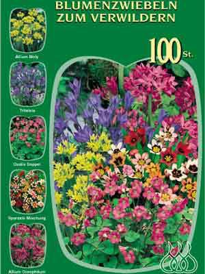 Sortiment Sommerblumen zum Verwildern (Art.Nr. 522640)
