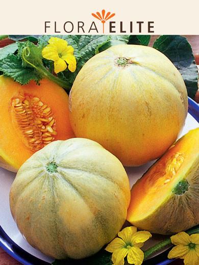 Melone 'Charentais' (Art.Nr. 21280)
