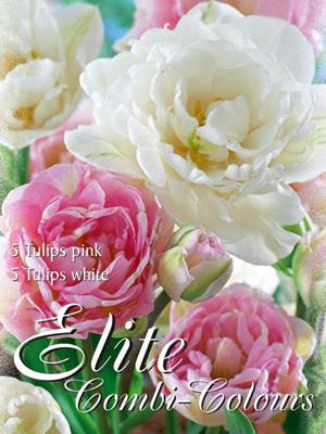 Edle Farbkombination mit späten, gefüllten Tulpen in den Farben rosa und weiß (Art.Nr. 598010)