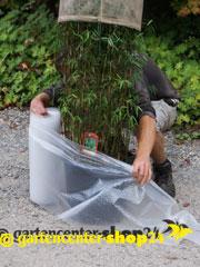 Uberwinterung Bambus Gartencenter Shop24