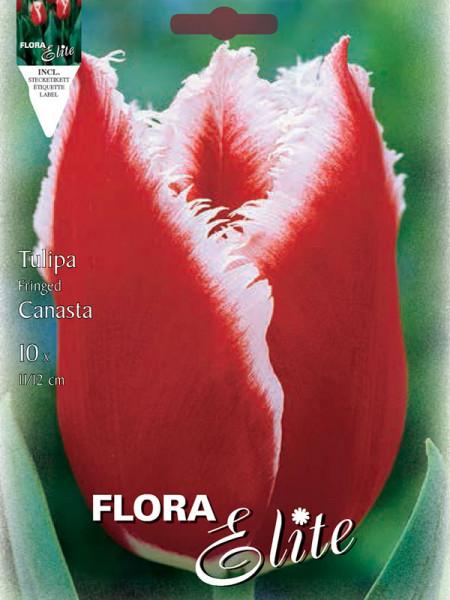 Tulpe Canasta