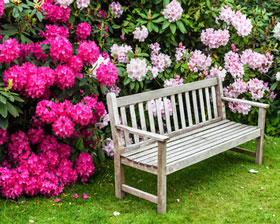 Rhododendron-im-garten