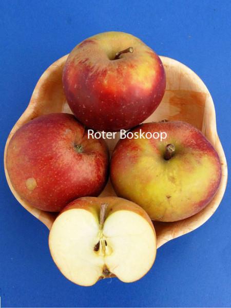 Duo-Apfelbaum - Jonagold und Roter Boskoop