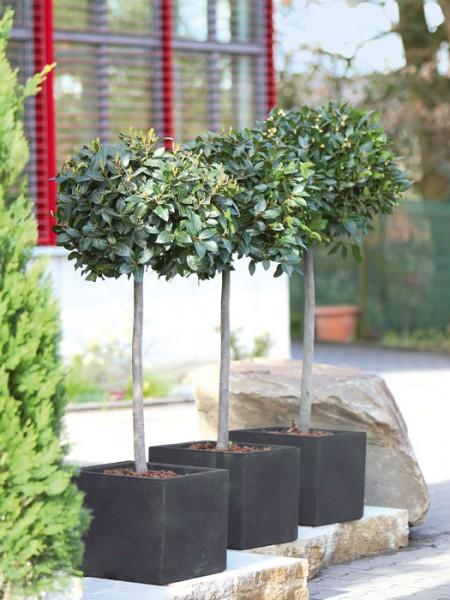 Pflanzkübel Capri bepflanzt