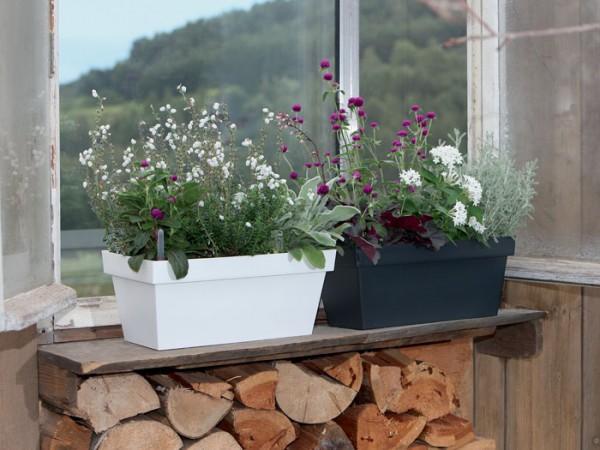 Blumenkasten Cube Case bepflanzt