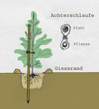 zeichnung-pflanzung-2
