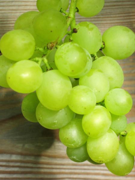 Tafel- und Weintraube Bianca