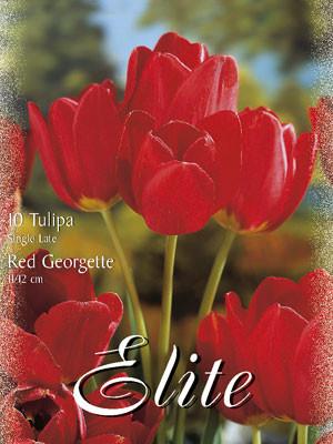Einfache späte Tulpe 'Red Georgette' (Art.Nr. 595364)