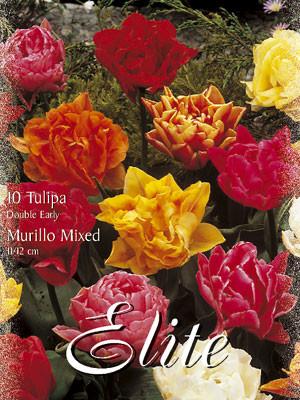 Gefüllte frühe Tulpen-Prachtmischung (Art.Nr. 595180)