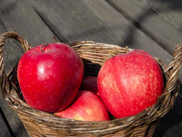 Der Apfel 'Gloster' im Korb