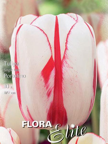 Einfache späte Tulpe 'Portofino' (Art.Nr. 595354)