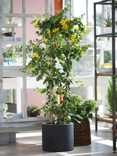 Pflanzkübel Cagliari bepflanzt