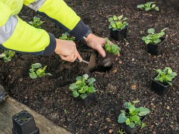 Hangbepflanzung Bodendecker bodendecker zur hangbefestigung