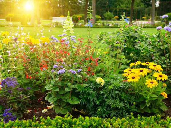 Sonnenkinder 5 Sorten (21 Pflanzen)