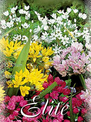 Allium-Prachtmischung (Art.Nr. 596340)