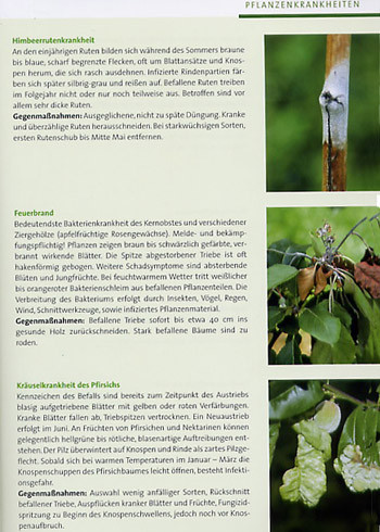 BdB-Handbuch ''Obstgehölze''