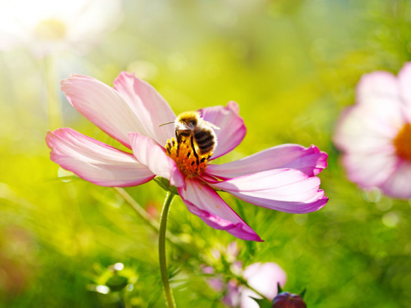 Staudensortiment für Bienenweiden