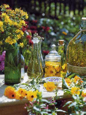 Kräutersortiment zur Zubereitung verschiedener Tees oder Bowlen