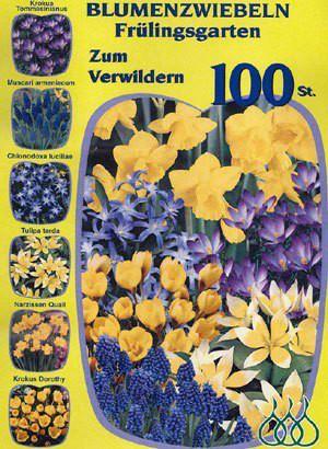 Sortiment Frühlingsgarten in Blau und Gelb (Art.Nr. 598220)