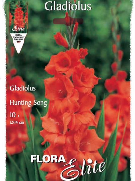 Großblumige Gladiole 'Hunting Song', Gladiolus (Art.Nr. 521264)