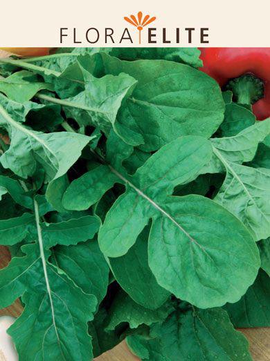 Salatrauke 'Aromatisch kultiviert' (Art.Nr. 21490)