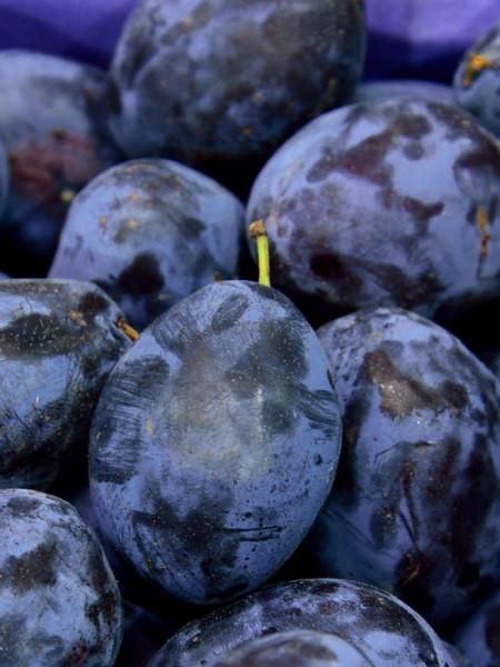 Dunkelblaue Früchte der Zwetsche Jojo